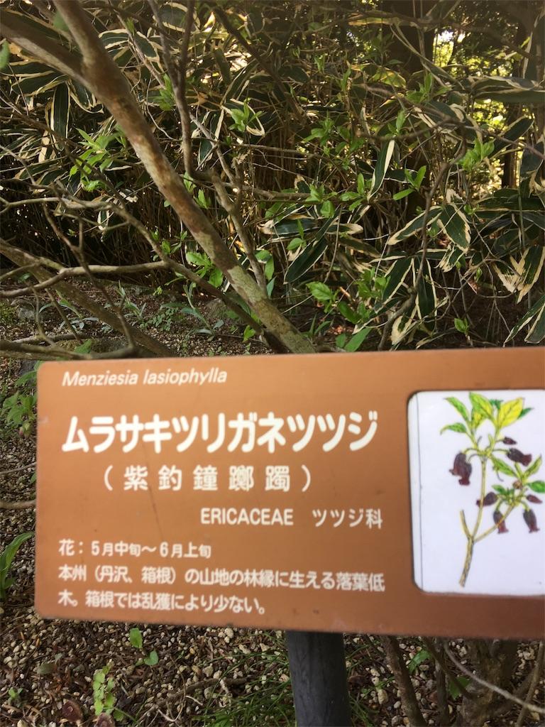 f:id:TokuheiKumagai:20190508210056j:image