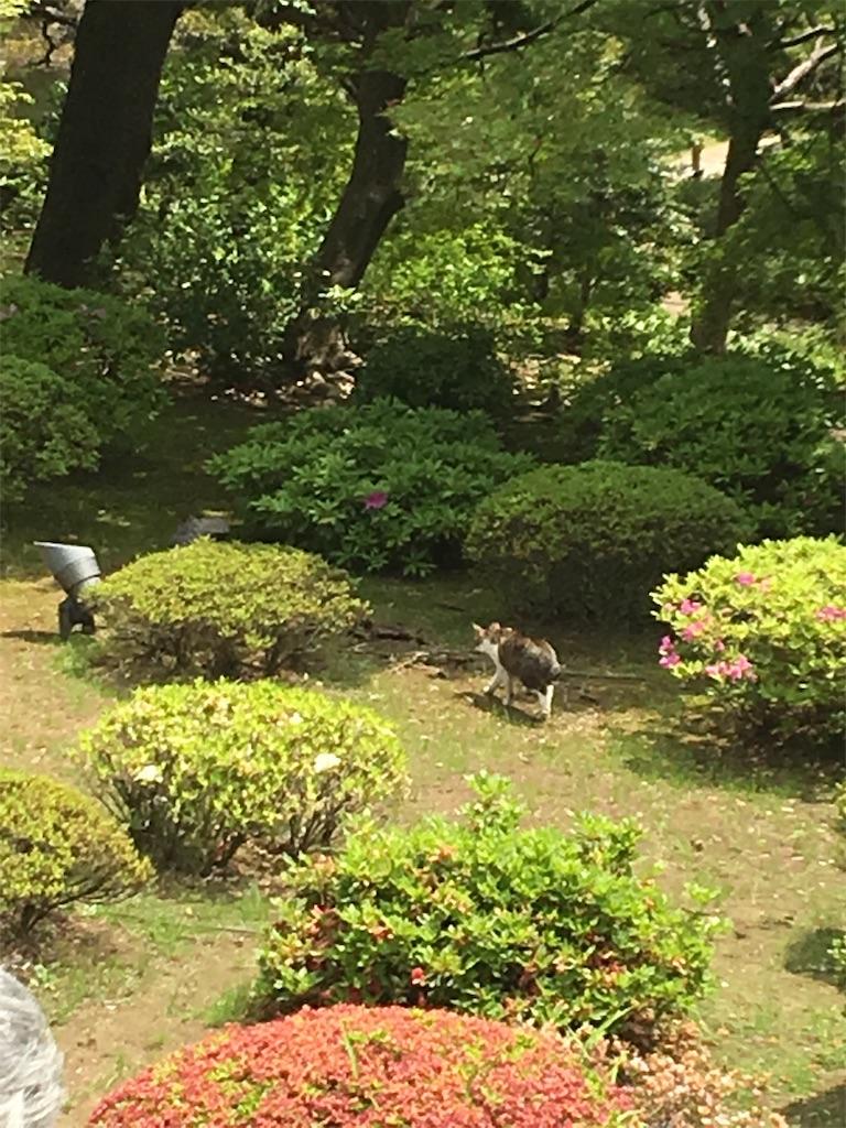 f:id:TokuheiKumagai:20190513230551j:image