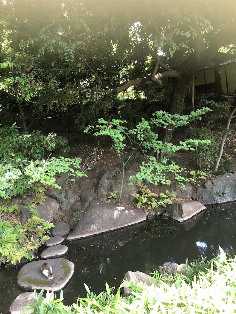 f:id:TokuheiKumagai:20190513231106j:image
