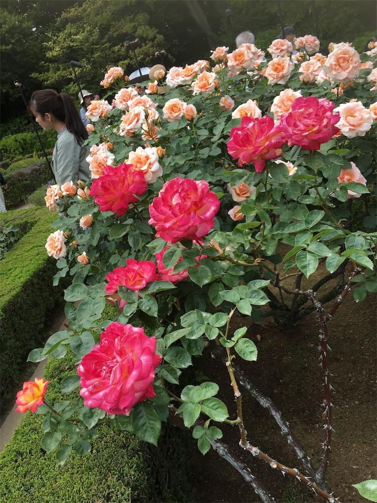 f:id:TokuheiKumagai:20190513231145j:image