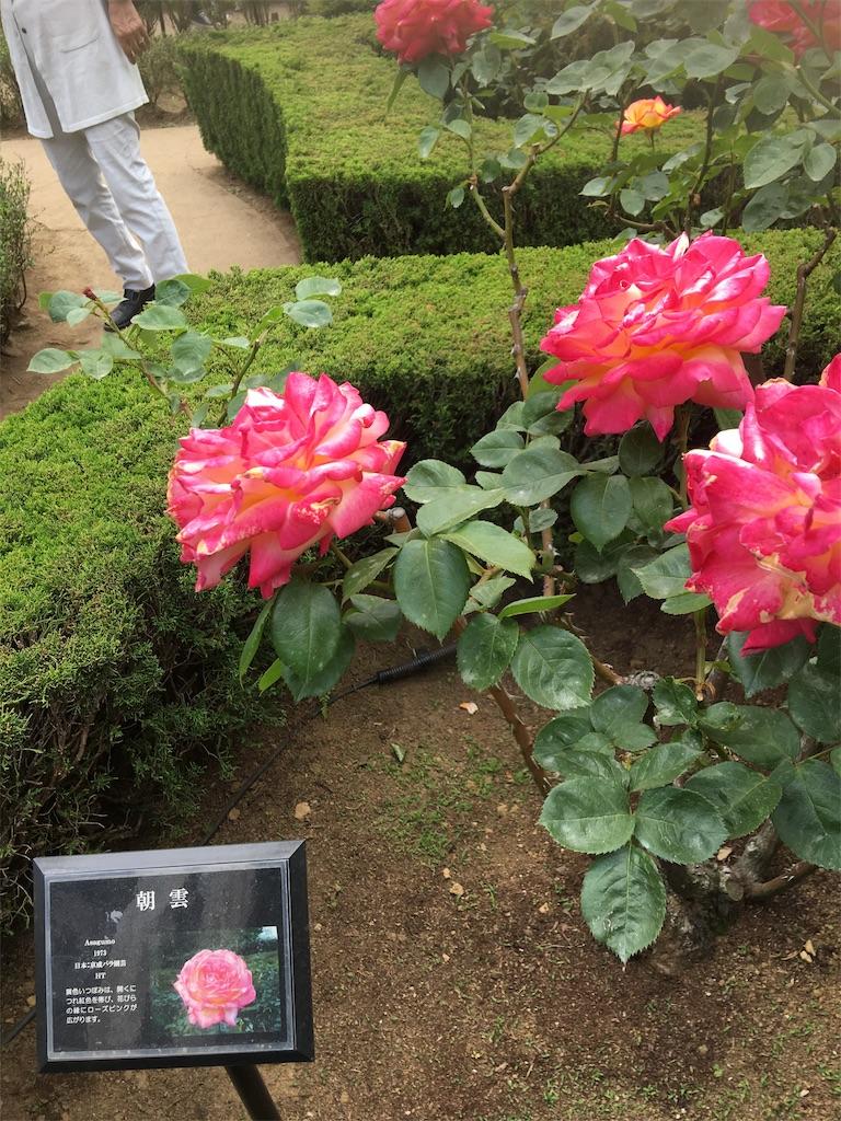 f:id:TokuheiKumagai:20190513231148j:image