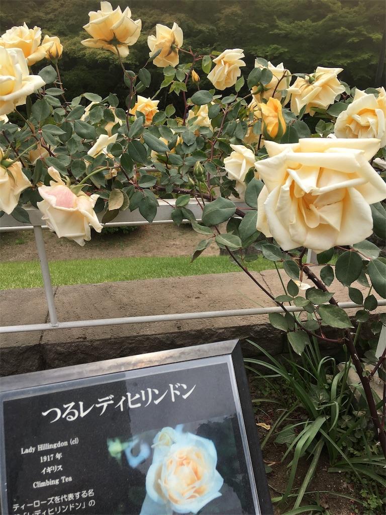 f:id:TokuheiKumagai:20190513231217j:image