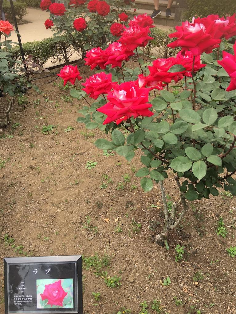 f:id:TokuheiKumagai:20190513231305j:image