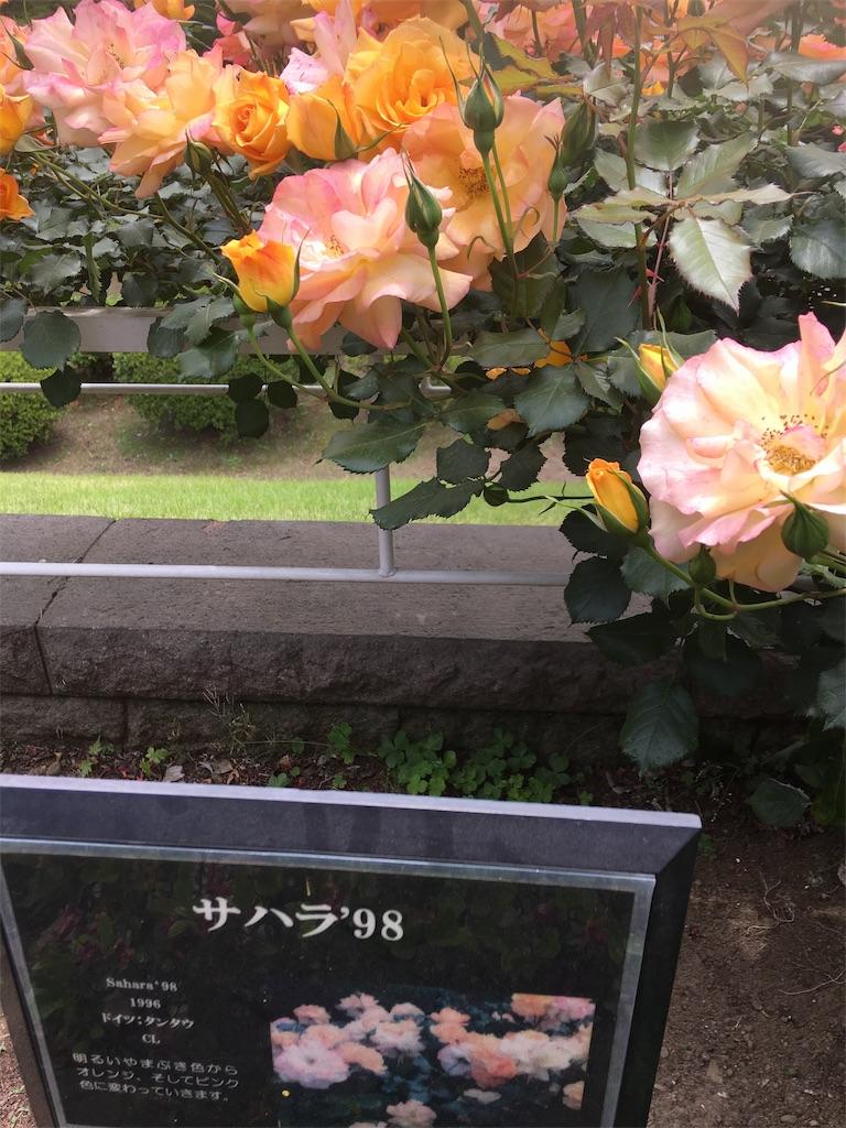 f:id:TokuheiKumagai:20190513231345j:image