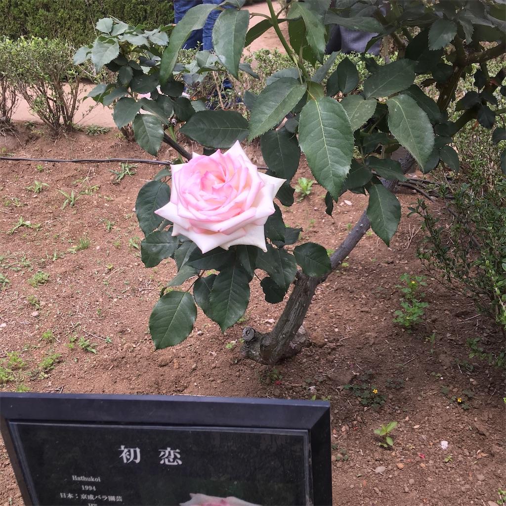 f:id:TokuheiKumagai:20190513231404j:image