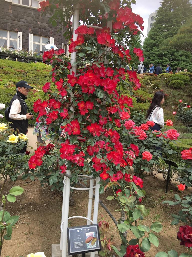 f:id:TokuheiKumagai:20190513231440j:image