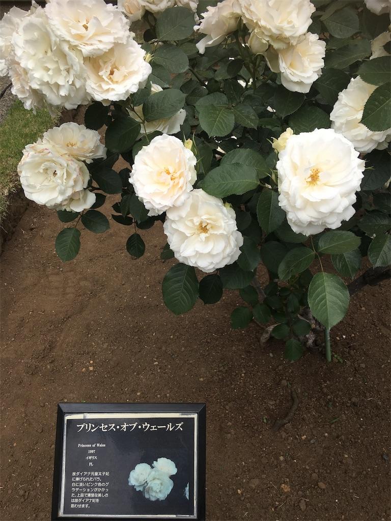 f:id:TokuheiKumagai:20190513231529j:image