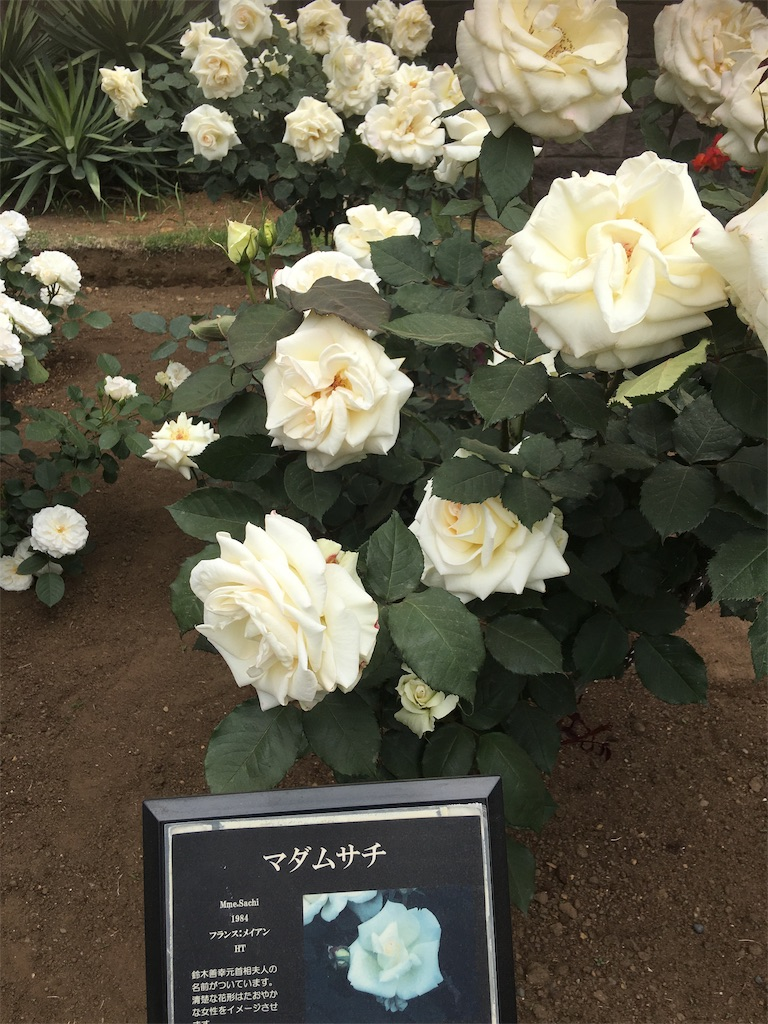 f:id:TokuheiKumagai:20190513231532j:image