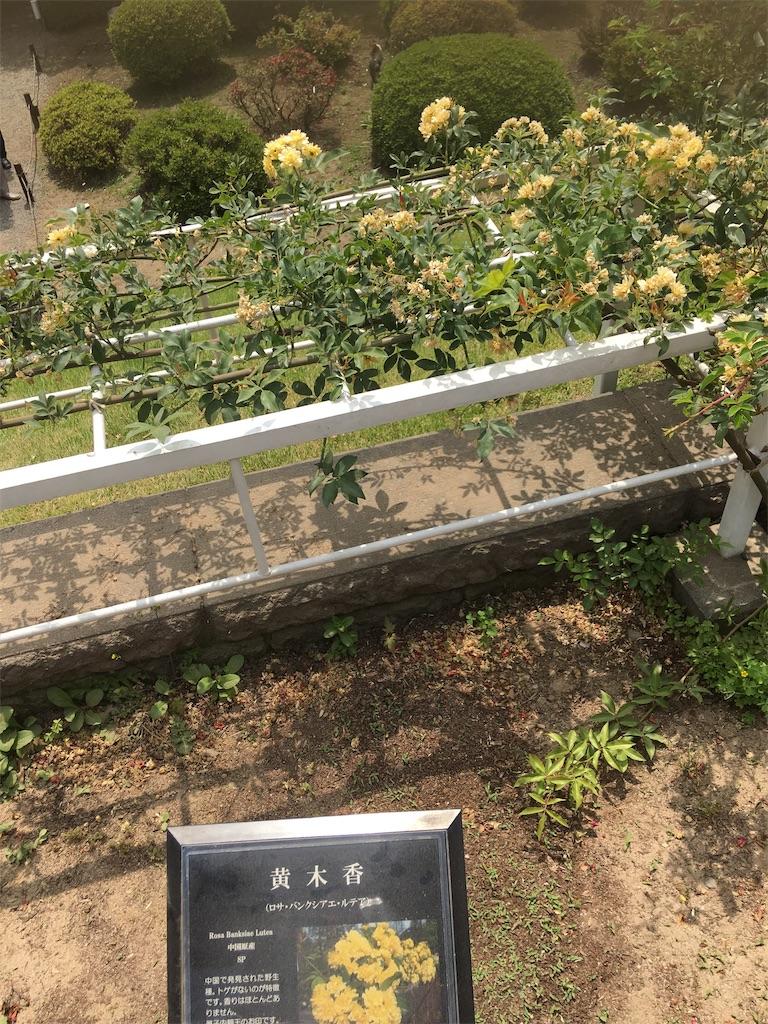 f:id:TokuheiKumagai:20190513231617j:image
