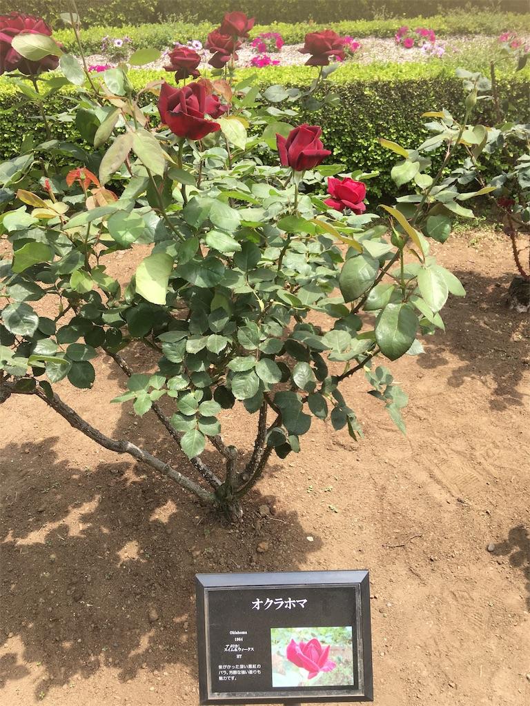 f:id:TokuheiKumagai:20190513231620j:image