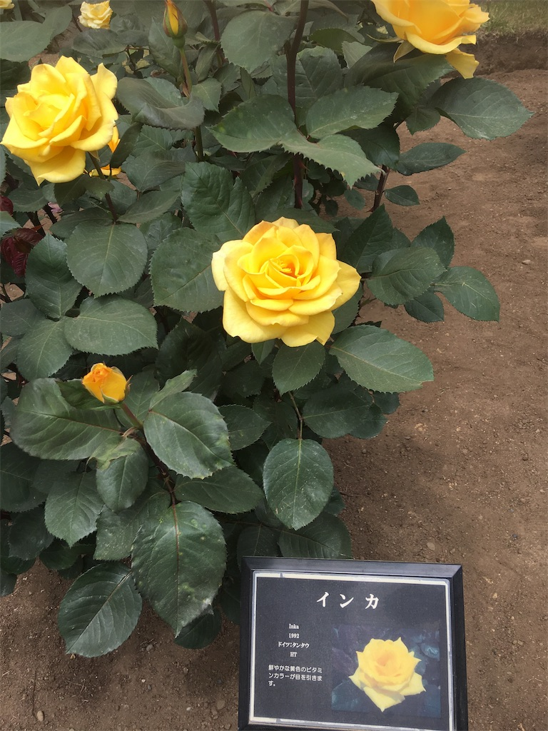 f:id:TokuheiKumagai:20190513231647j:image