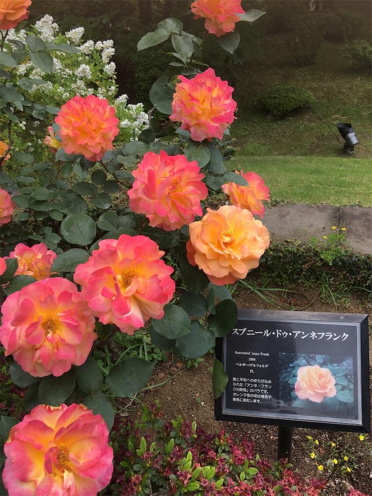 f:id:TokuheiKumagai:20190513231817j:image
