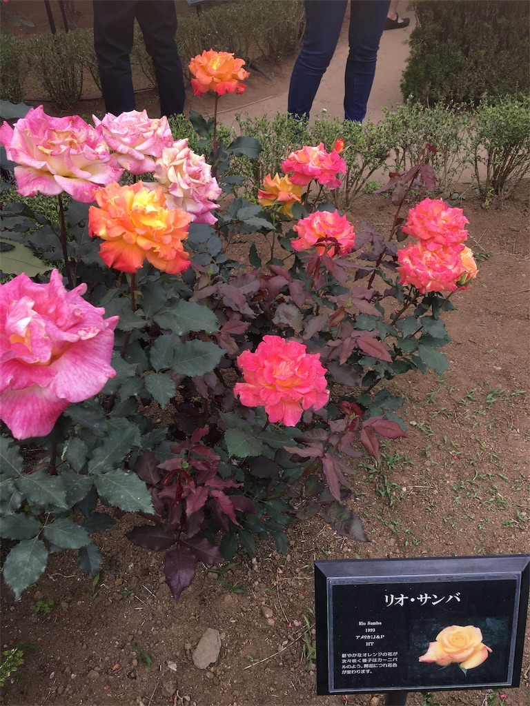 f:id:TokuheiKumagai:20190513231824j:image