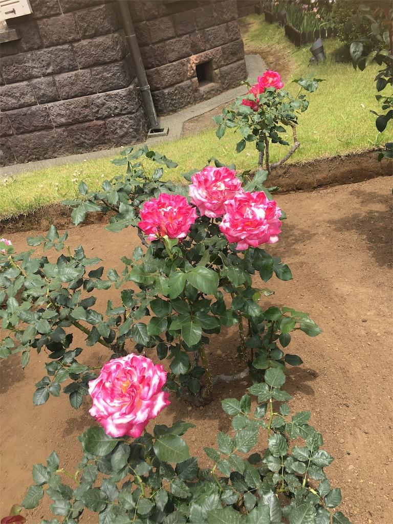 f:id:TokuheiKumagai:20190513231909j:image