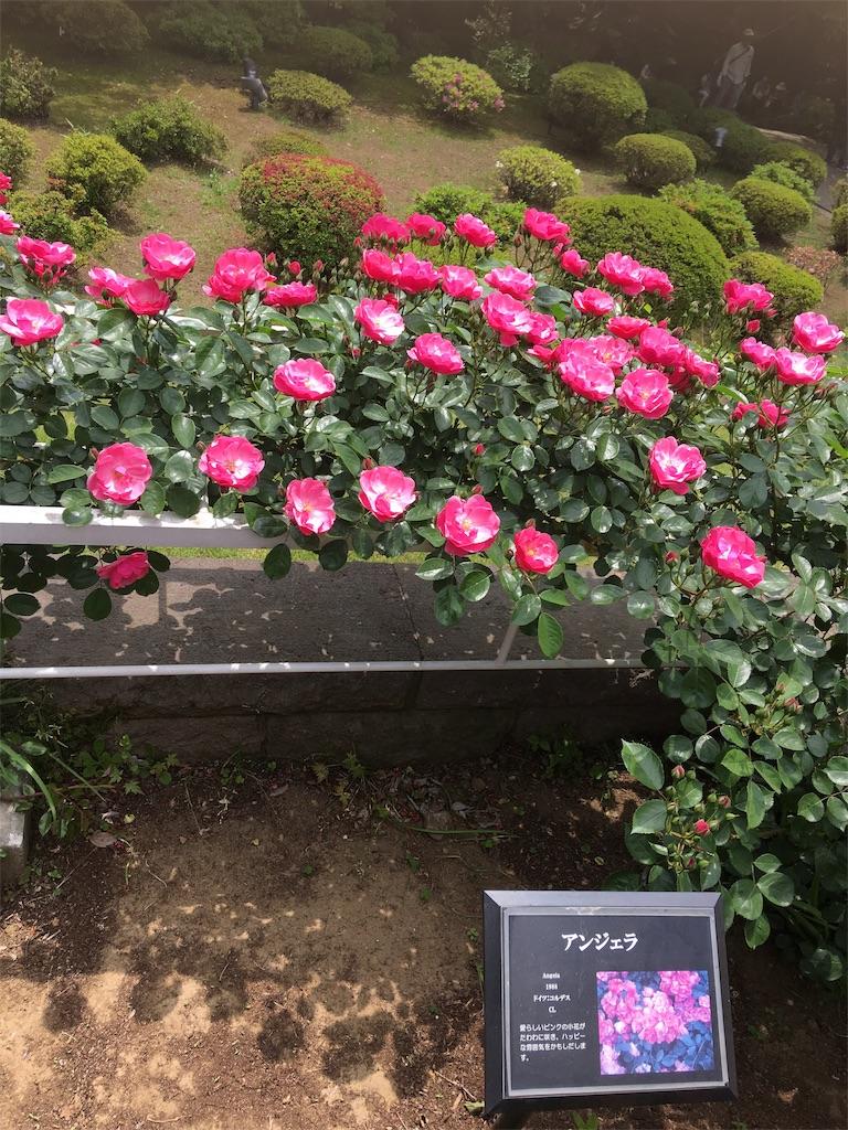 f:id:TokuheiKumagai:20190513232108j:image