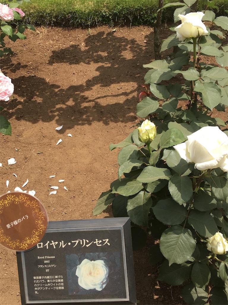 f:id:TokuheiKumagai:20190513232155j:image