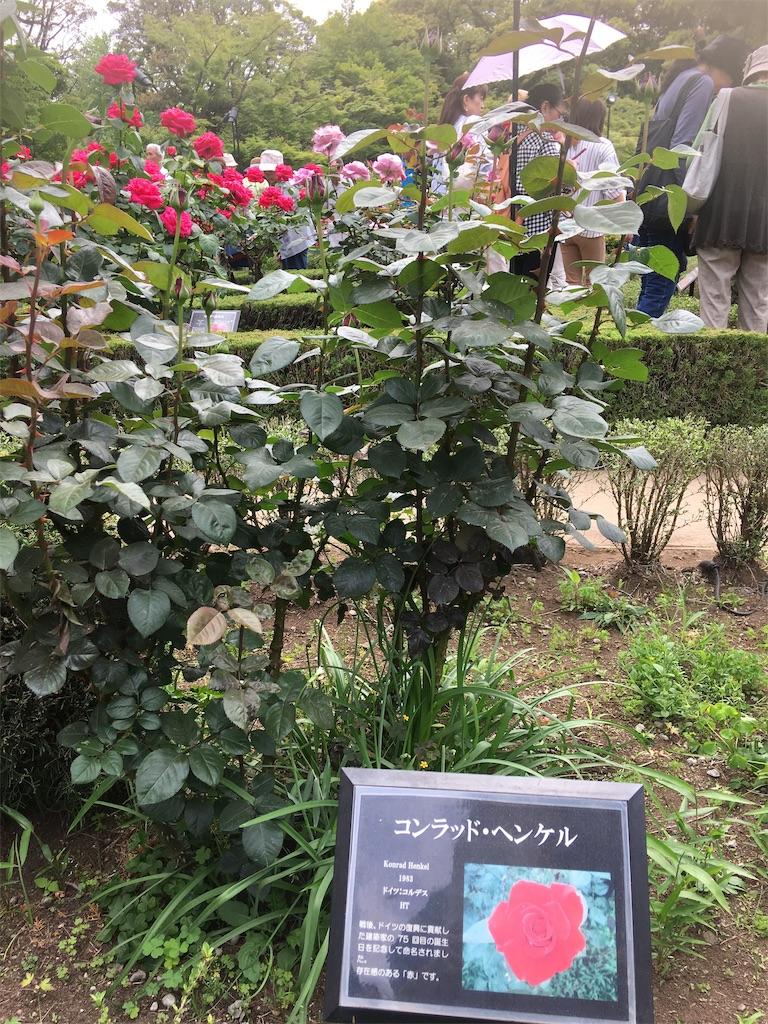 f:id:TokuheiKumagai:20190513232207j:image