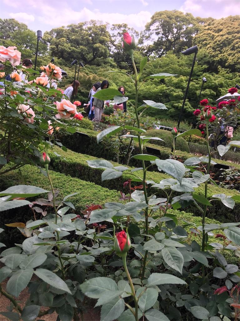 f:id:TokuheiKumagai:20190513232256j:image