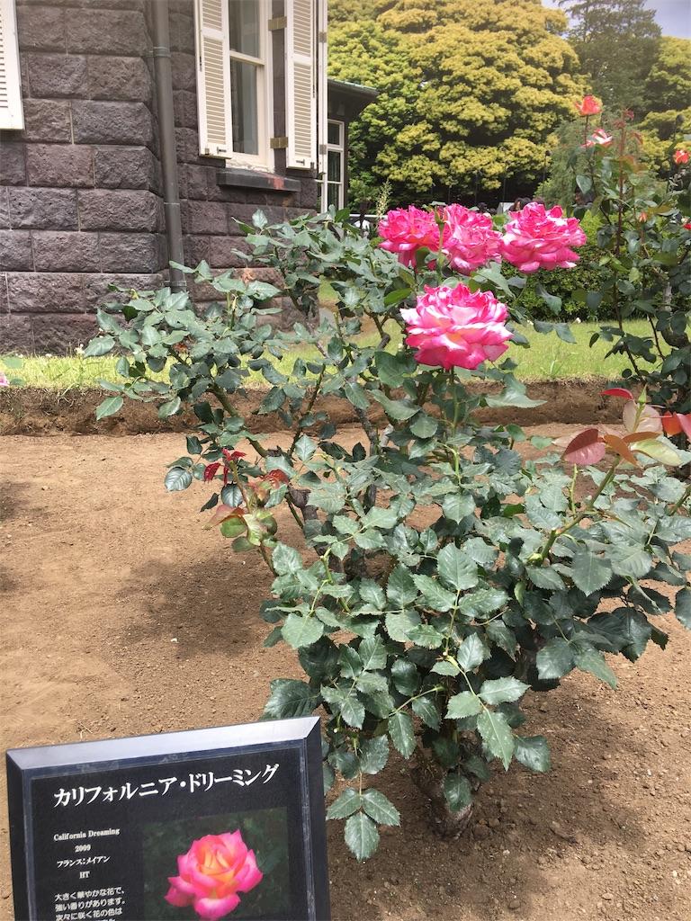 f:id:TokuheiKumagai:20190513232323j:image