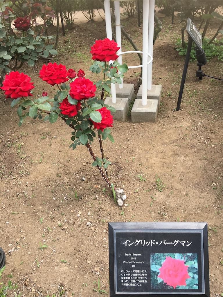 f:id:TokuheiKumagai:20190513232456j:image