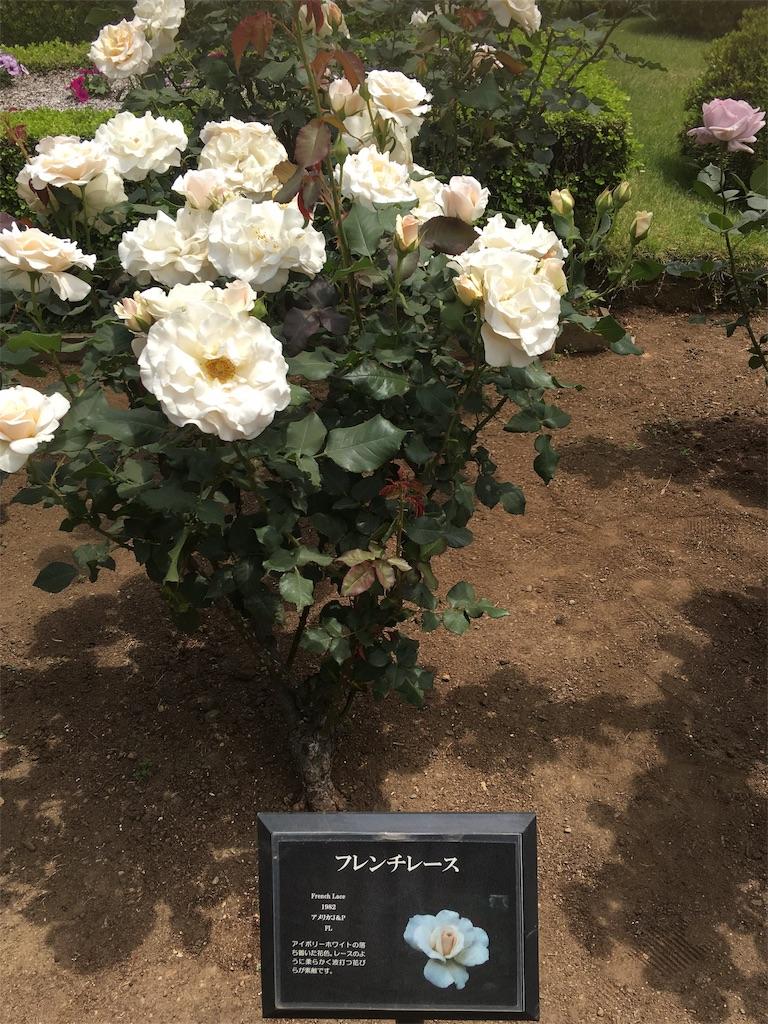 f:id:TokuheiKumagai:20190513232500j:image