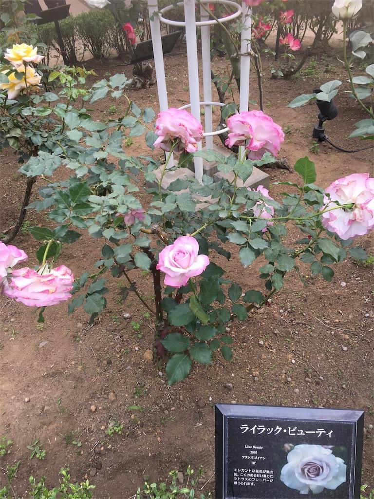 f:id:TokuheiKumagai:20190513232517j:image