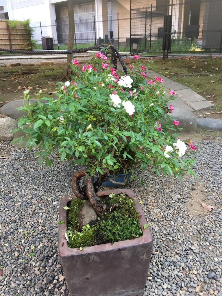 f:id:TokuheiKumagai:20190513235104j:image