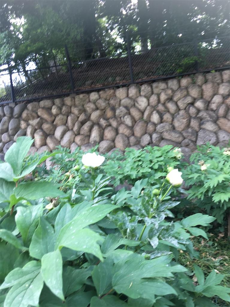 f:id:TokuheiKumagai:20190513235619j:image