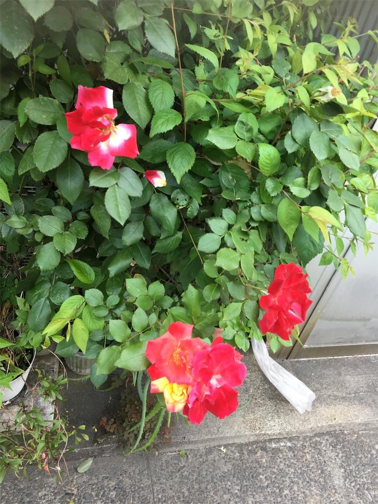 f:id:TokuheiKumagai:20190514003602j:image