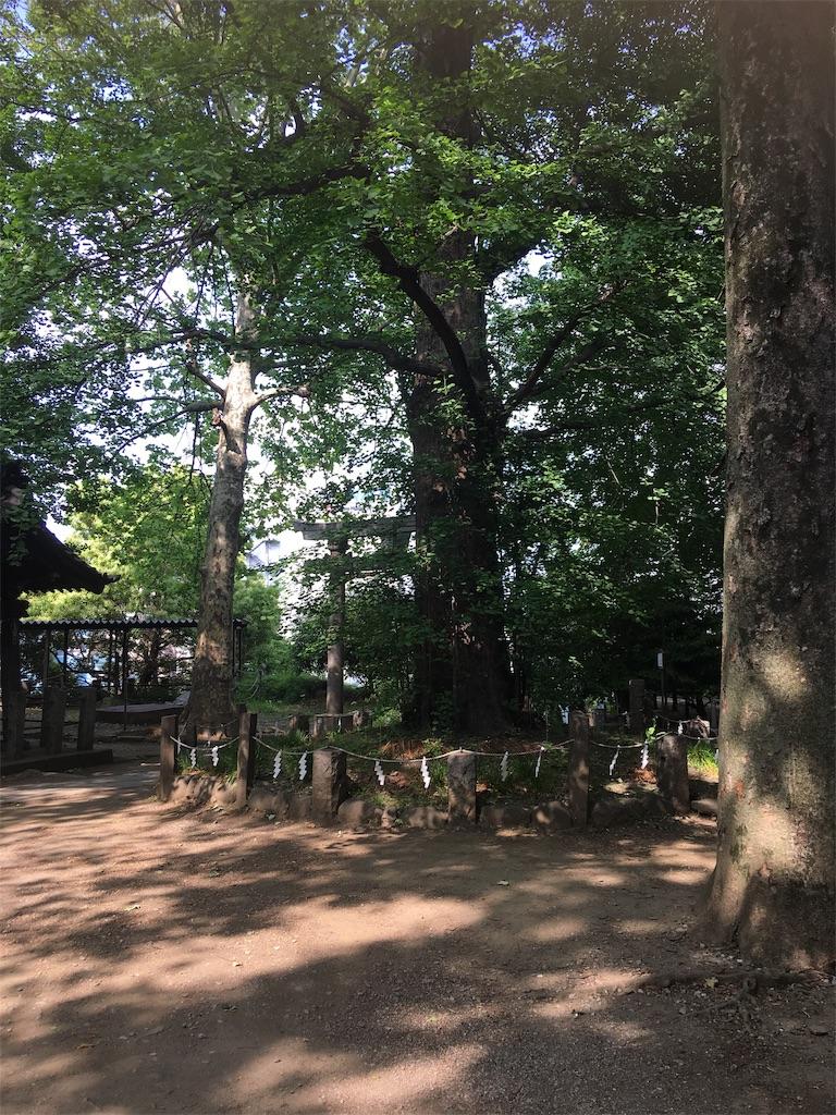 f:id:TokuheiKumagai:20190514003609j:image