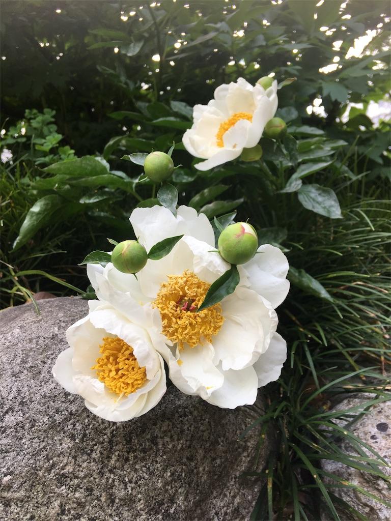 f:id:TokuheiKumagai:20190514010024j:image