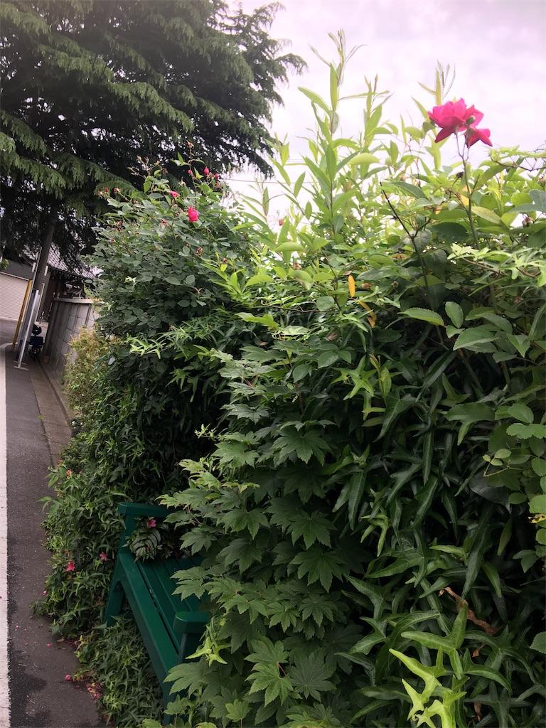 f:id:TokuheiKumagai:20190514221955j:image