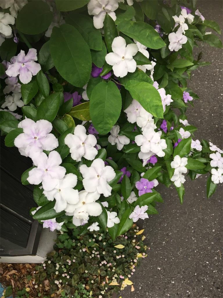 f:id:TokuheiKumagai:20190514222035j:image