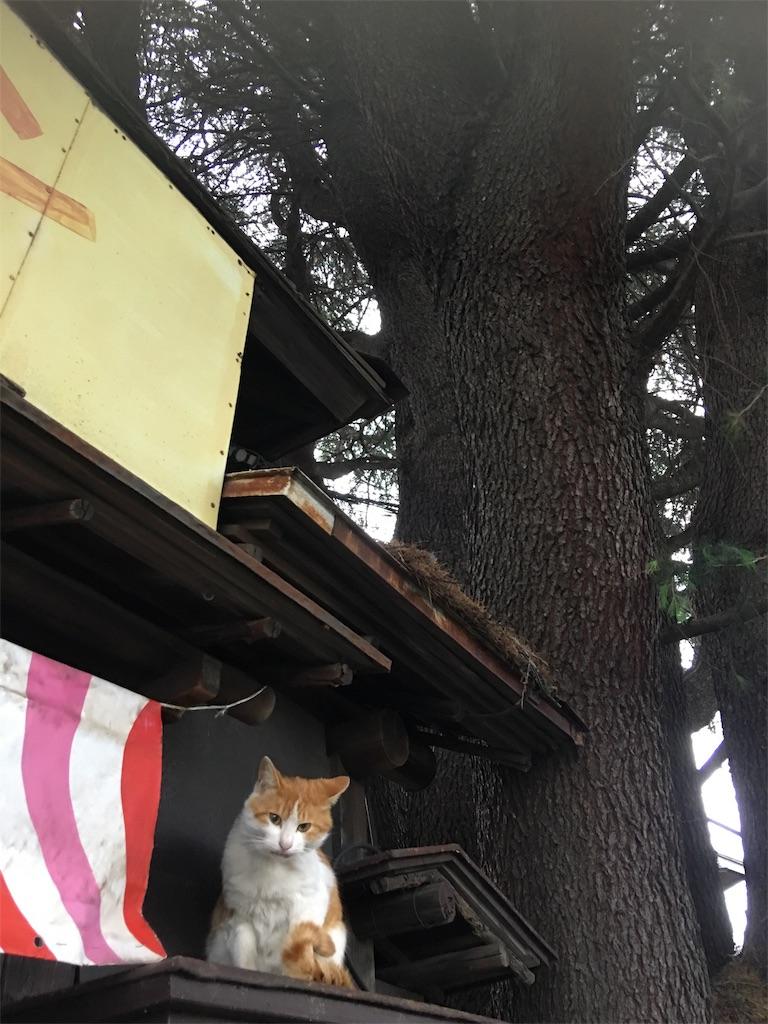 f:id:TokuheiKumagai:20190514222038j:image