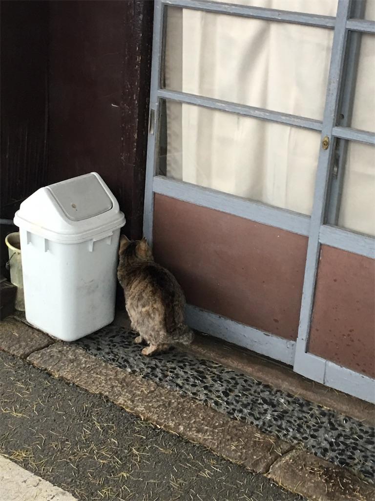 f:id:TokuheiKumagai:20190514222041j:image