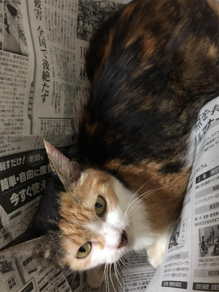 f:id:TokuheiKumagai:20190515224959j:image