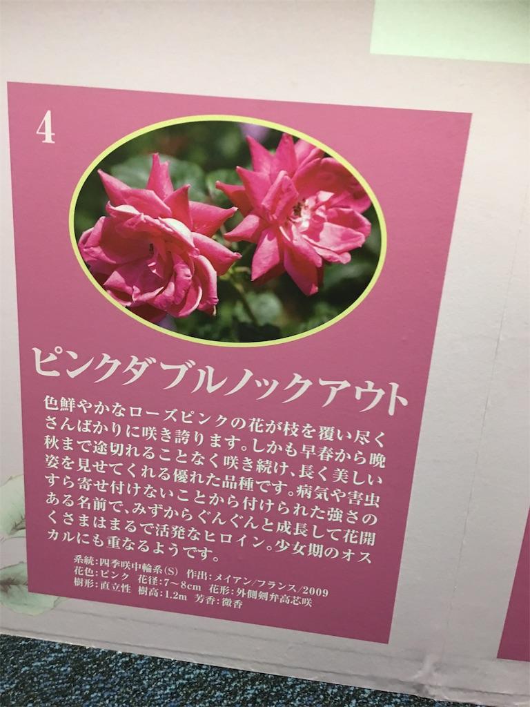 f:id:TokuheiKumagai:20190517214307j:image