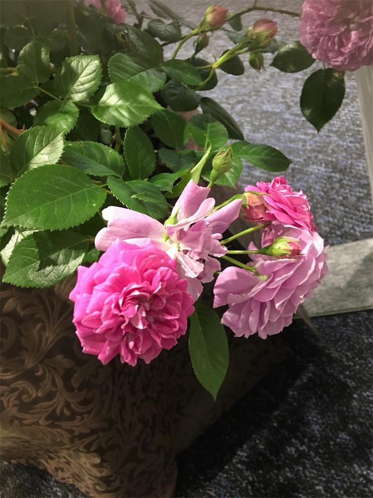f:id:TokuheiKumagai:20190517223456j:image