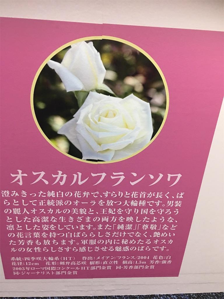 f:id:TokuheiKumagai:20190517223550j:image