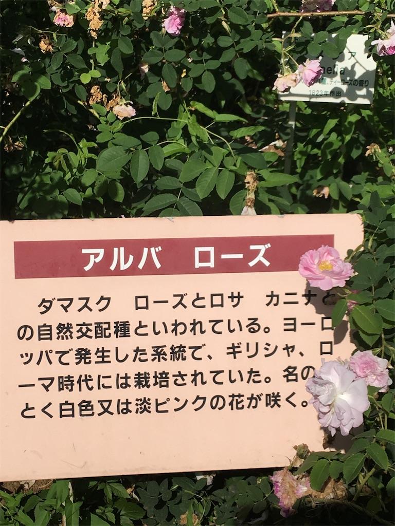 f:id:TokuheiKumagai:20190530205131j:image