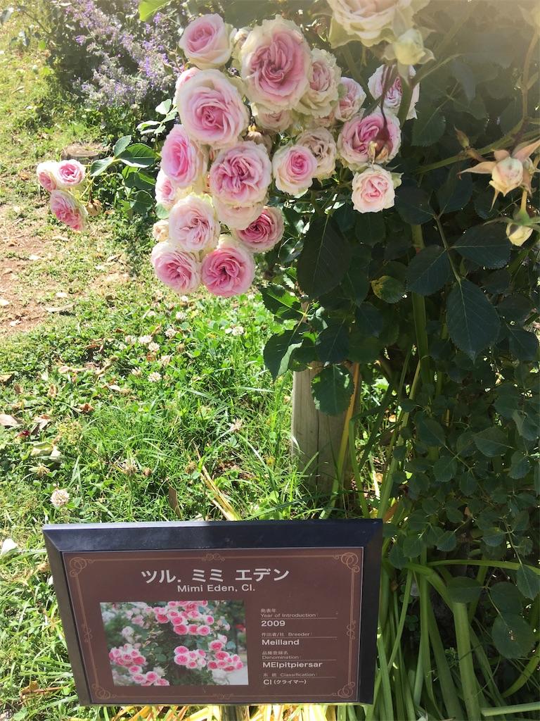 f:id:TokuheiKumagai:20190530205137j:image