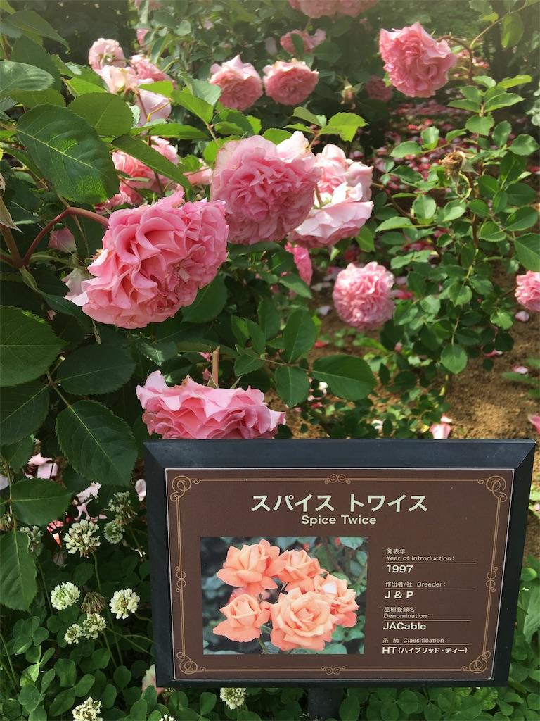 f:id:TokuheiKumagai:20190530205350j:image