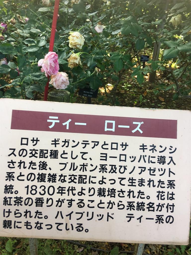 f:id:TokuheiKumagai:20190530205402j:image