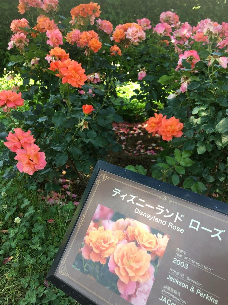 f:id:TokuheiKumagai:20190530205721j:image