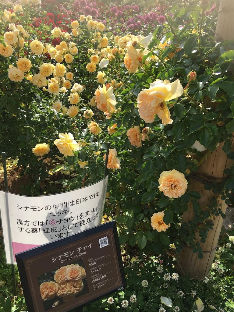 f:id:TokuheiKumagai:20190530210006j:image