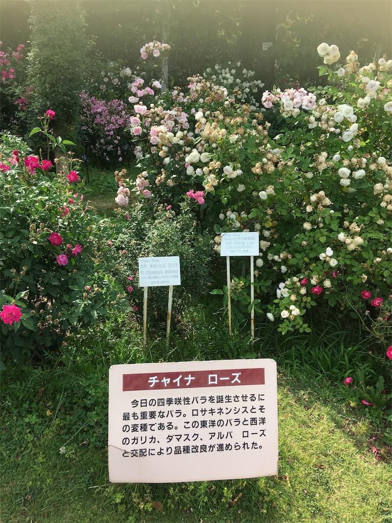 f:id:TokuheiKumagai:20190530210128j:image
