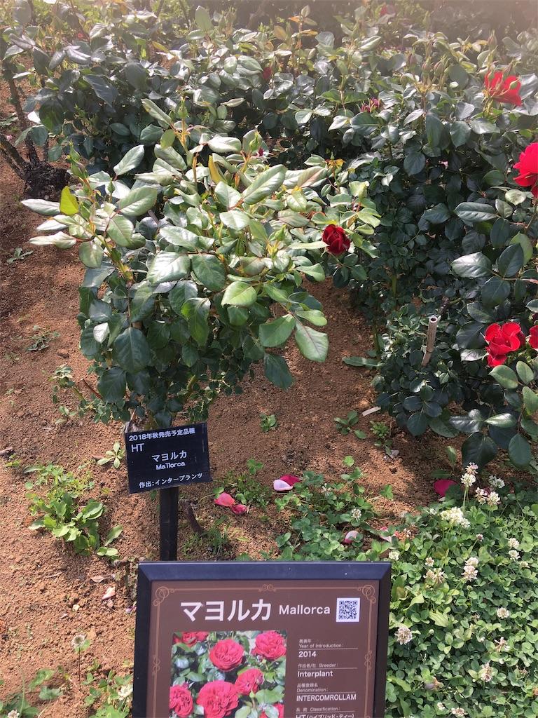 f:id:TokuheiKumagai:20190530210418j:image