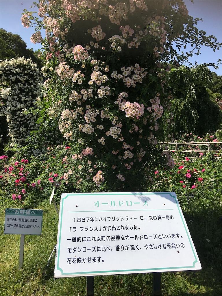 f:id:TokuheiKumagai:20190530210514j:image