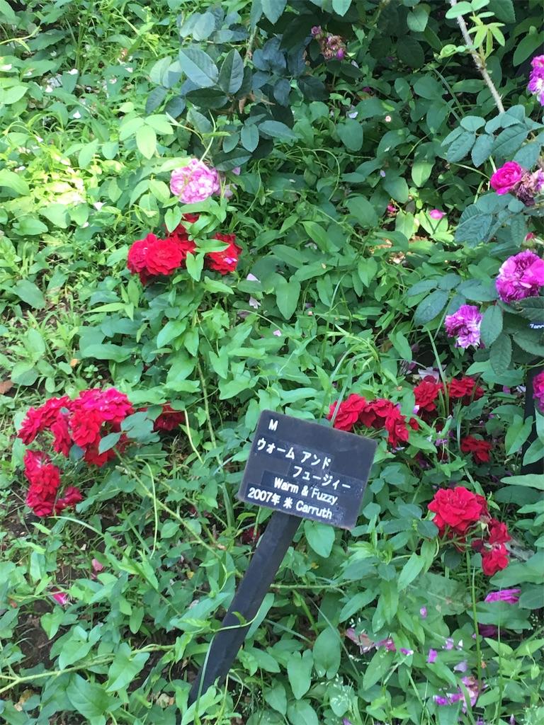 f:id:TokuheiKumagai:20190530210524j:image
