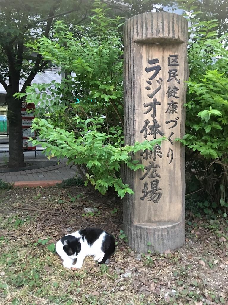 f:id:TokuheiKumagai:20190602221503j:image